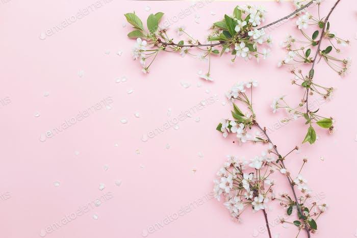 Sakura blossom branches