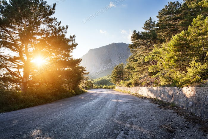 Asphalt road in summer forest at sunset. Crimean mountains