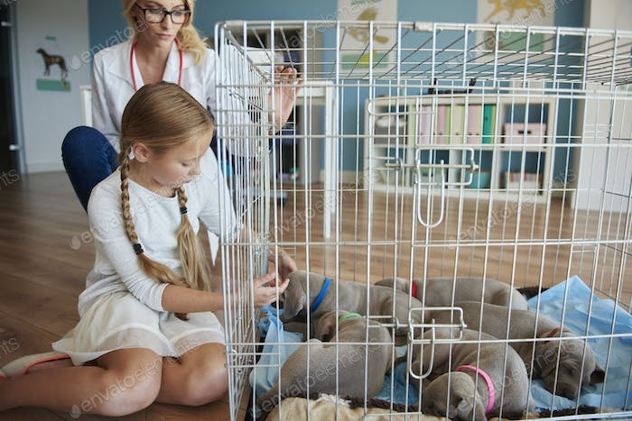 Doctor and girl next to the cage with puppies