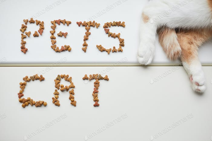 Pet food on the table