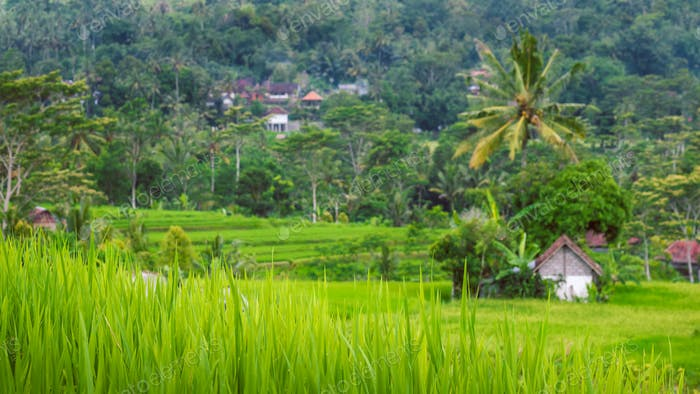 Rice tarraces in Sidemen, Rainy clouds are moving down, Bali, Indonesia