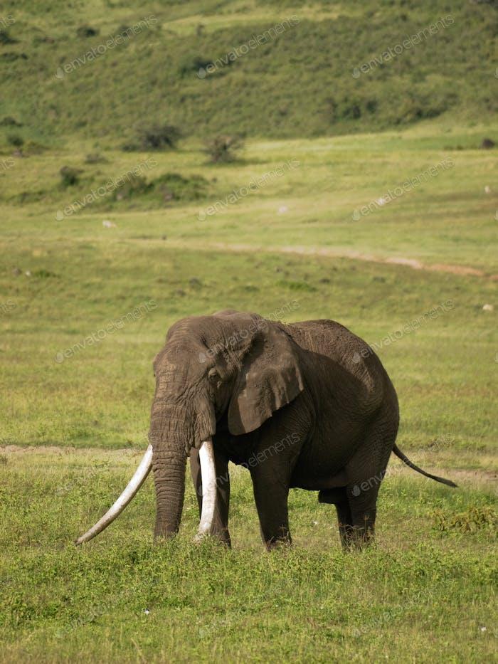 Ngorongoro-7