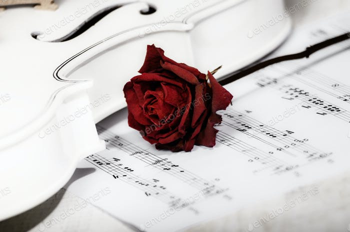 Close view of a white violin dry rose and musical notes on woode