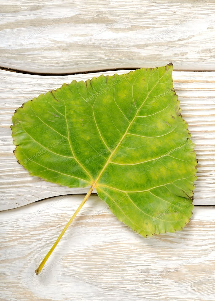Poplar leaf on a wooden background