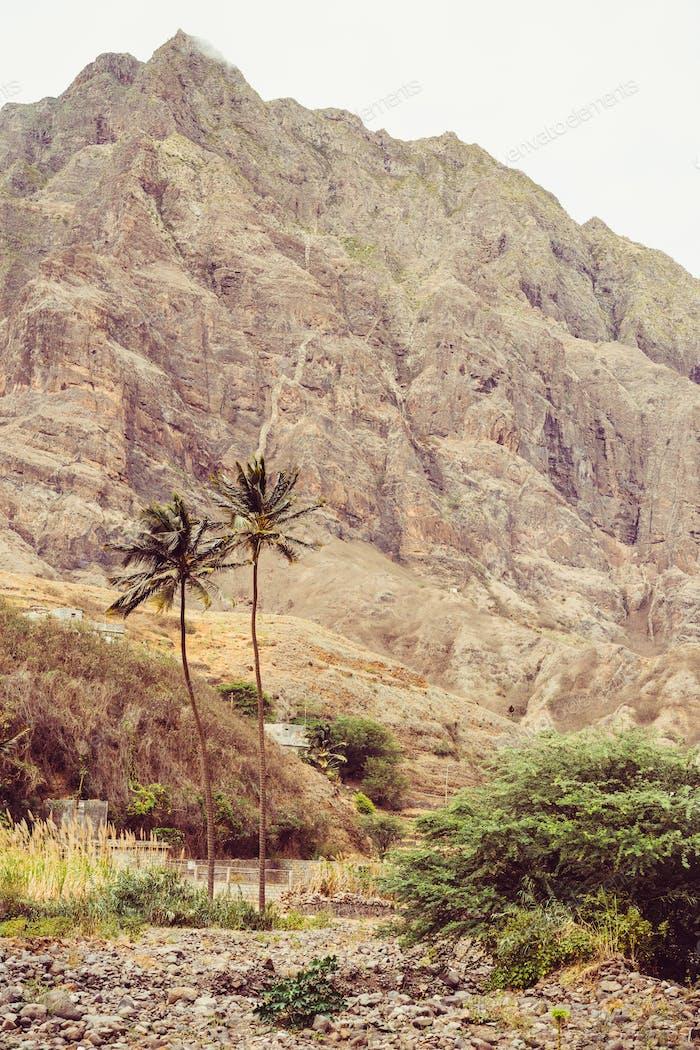 Palms trees in arid stony terrain. Huge barren mountain rising on the background. Santo Antao Island