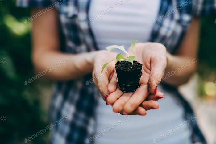 Small seedling with soil resting in woman's hands