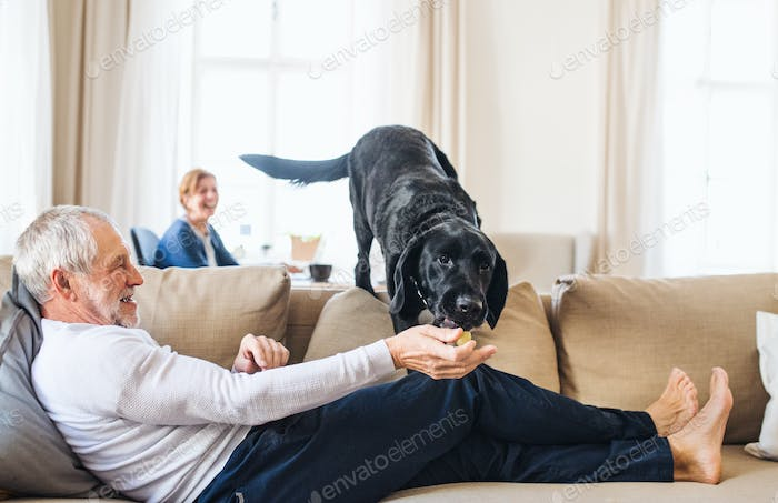 A happy senior couple indoors with a pet dog at home.
