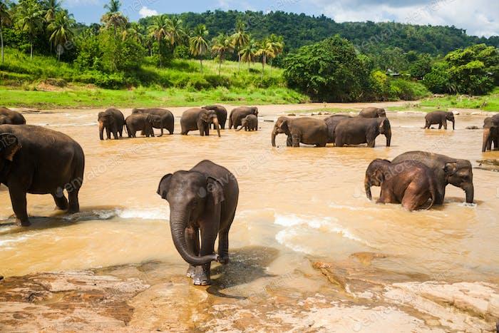 Herd of elephants