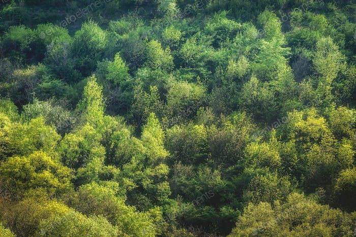 Schöner Wald (Holz) auf Balkan.