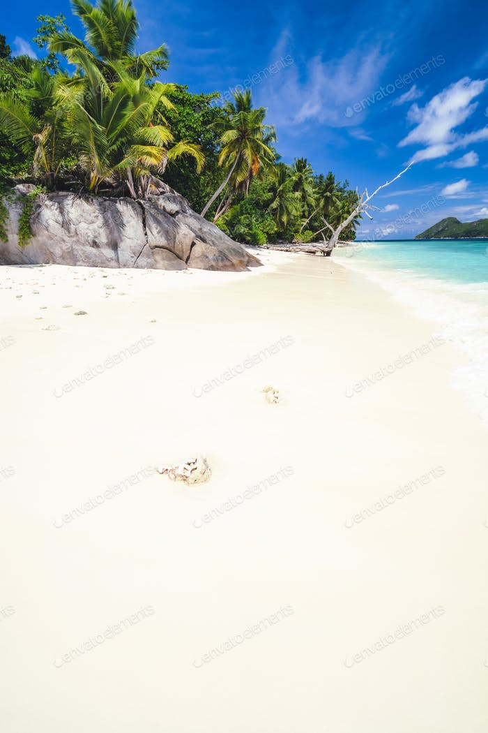 Vacation holiday background of paradise beach. White sand, palm trees and blue ocean lagoon
