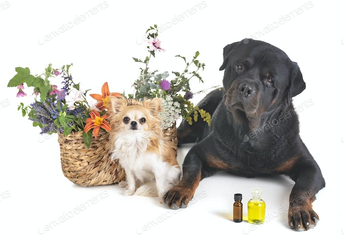 dogs and flowers