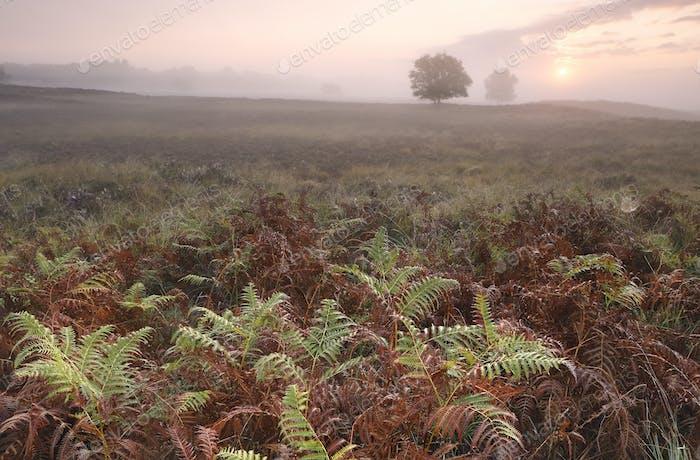 misty sunrise over fern leaves