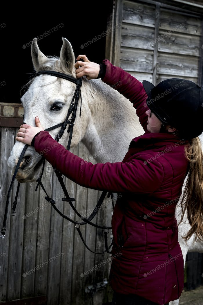 Young woman standing outside stable, putting bridle on white Cob horse.