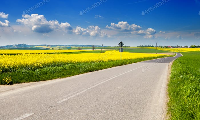 Yellow agriculture rapeseed field landscape with road canola or colza