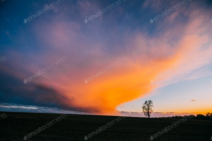 Tree In Spring Field At Evening Sunset. Morning Natural Bright D