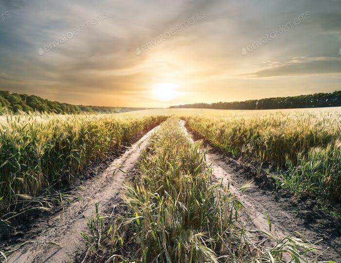 Landstraße im Feld mit Weizenohren