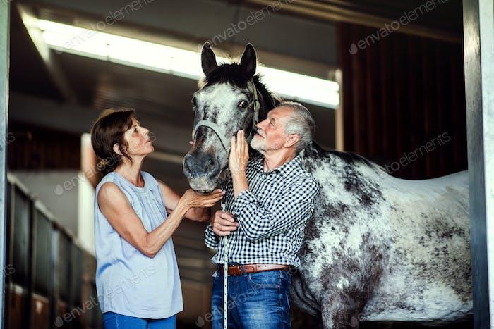 Ein älteres Paar, das ein Pferd in einem Stall streicheln kann.