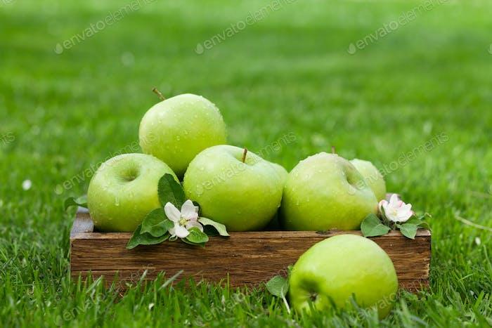 Frische Gartenäpfel in Box
