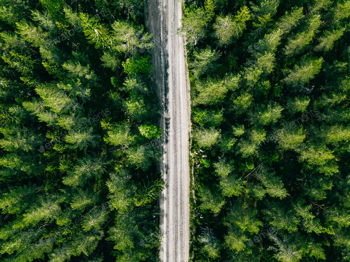 Aerial view of green summer forest road.
