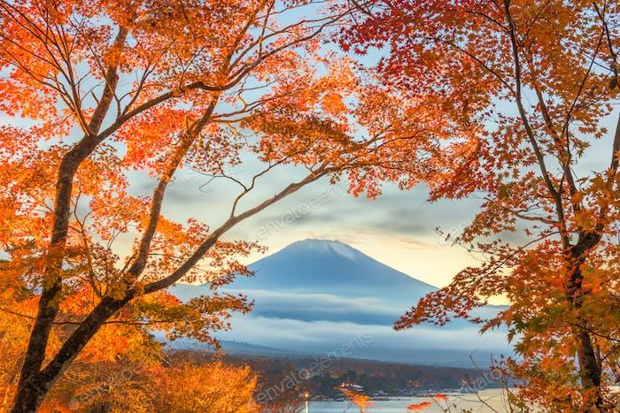 Mt. Fuji, Japan mit Herbstlaub