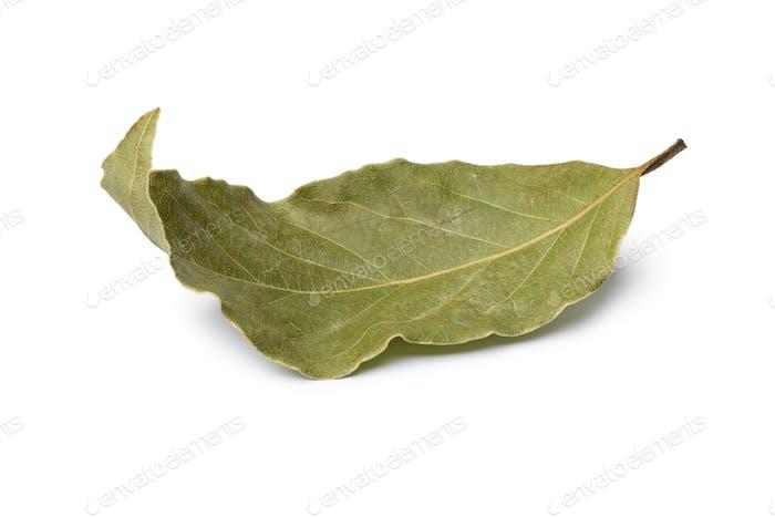 Dried laurel bay leaf