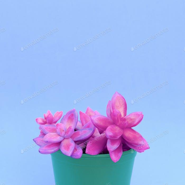 Colorful cactus design art. Minimal cactus lover concept