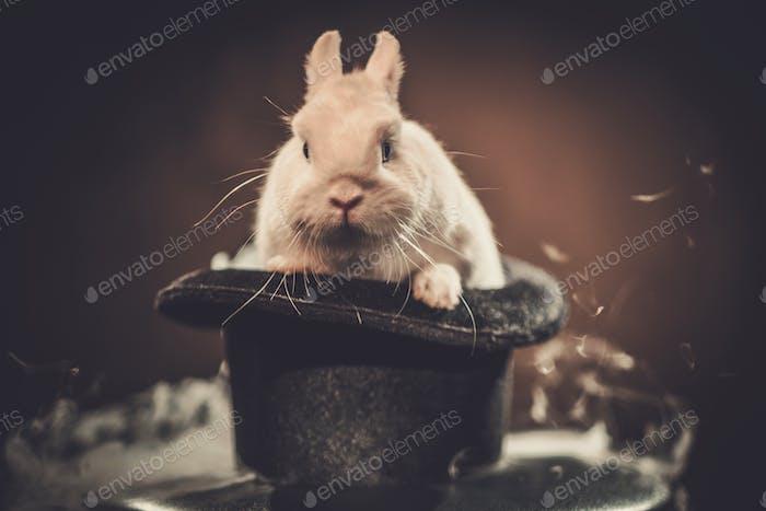 Маленький кролик в волшебной шляпе