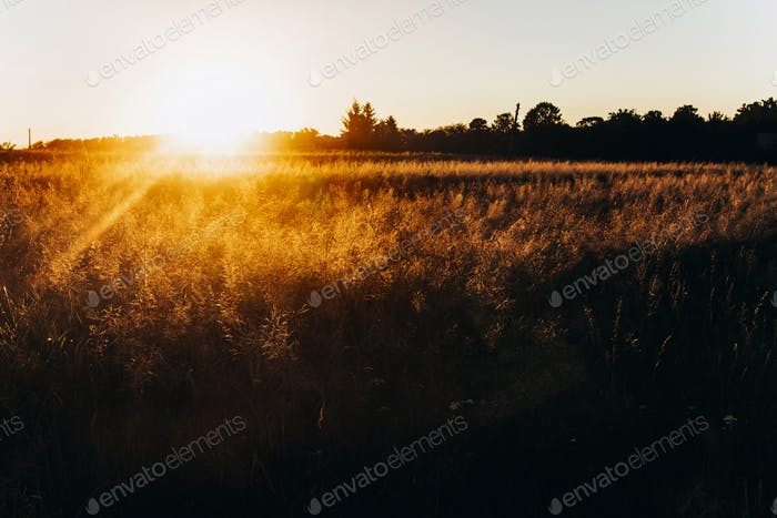 Sonnenuntergangsstrahlen auf Sommerfeld
