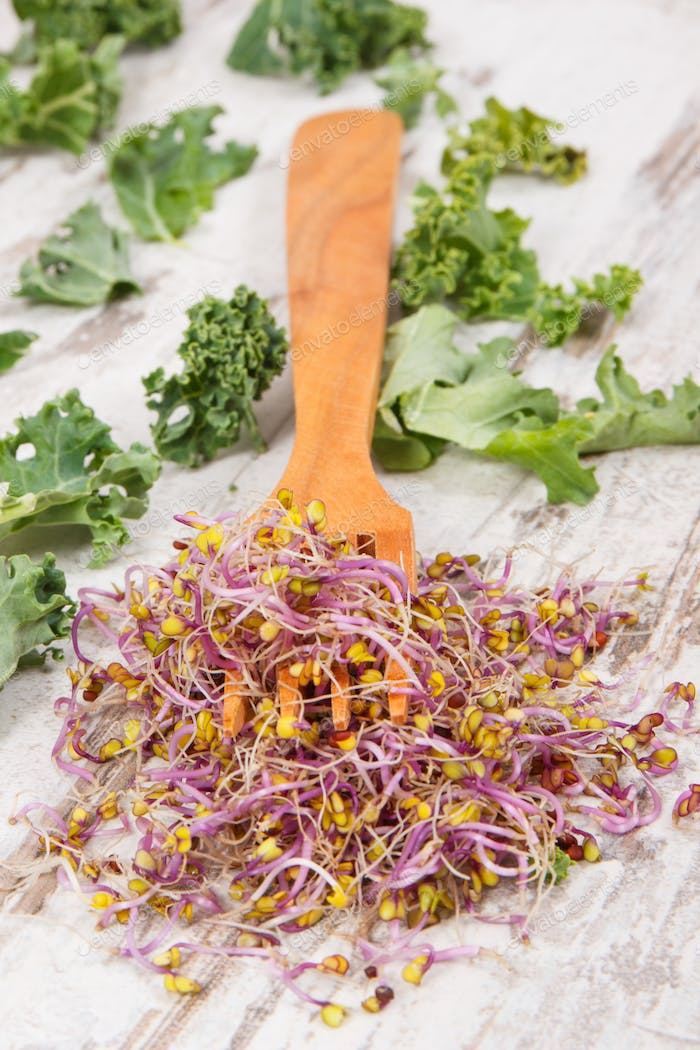 Fork with sprouted kale seeds and leaves of vegetable. Healthy lifestyle and nutrition