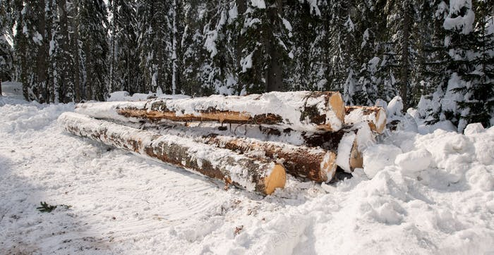 Logs in the forest under the snow
