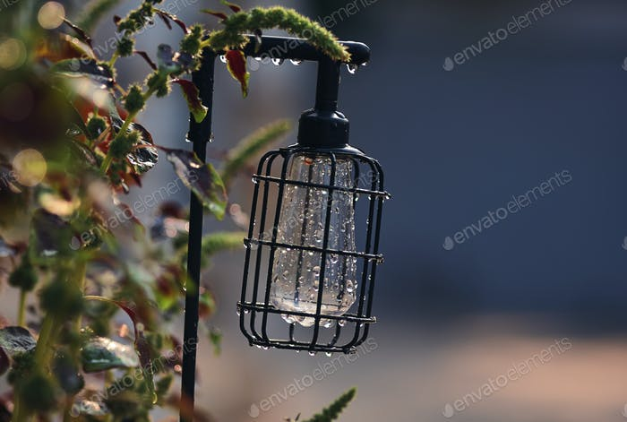 The vintage style lantern in the garden
