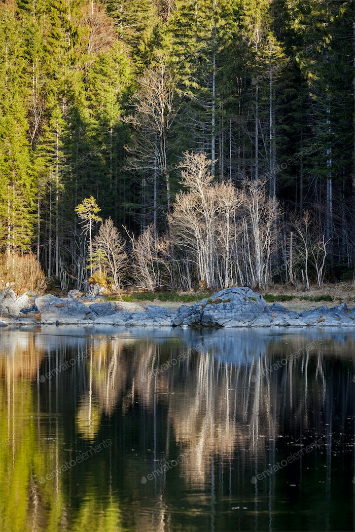 Forest trees on Frillensee (small lake near Eibsee), Germany