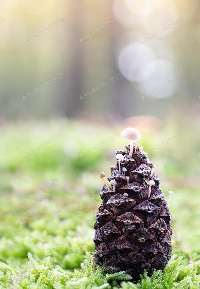 pine cone mushroom autumn