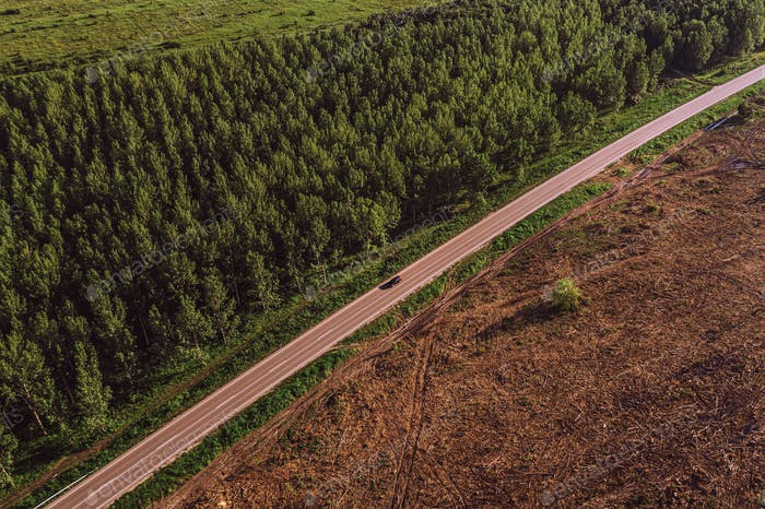 Aerial view of road between cottonwood forest and deforested are