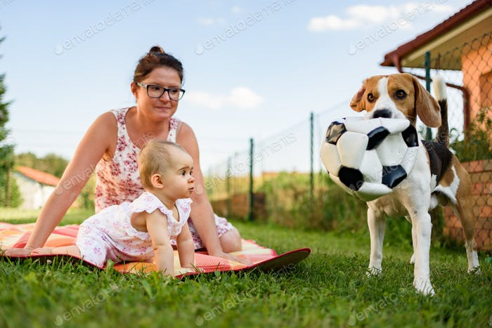 Adorable baby girl with mother and beagle family dog on colorful blanket on green grass. Child