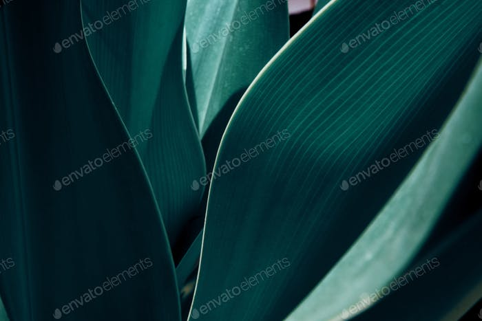 Green tropical plant close-up. Abstract natural floral background