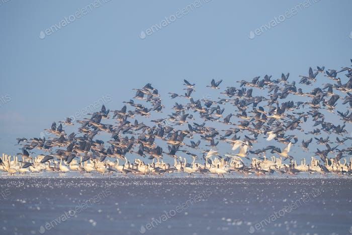 winter migratory bird landscape