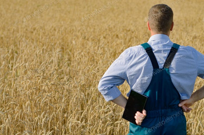Farmer with tablet computer inspecting wheat field. Place for te