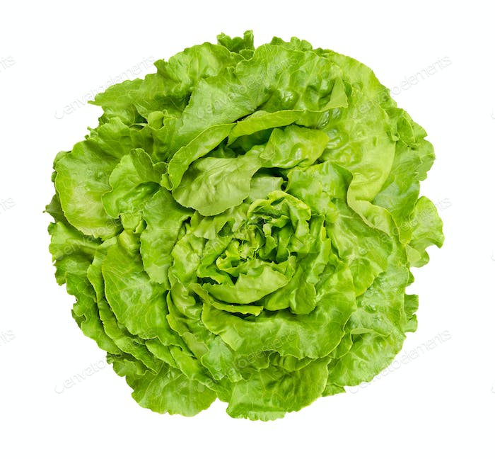 Butterhead lettuce from above over white