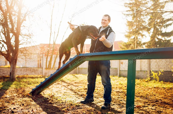 Cynologist training sniffing dog on playground