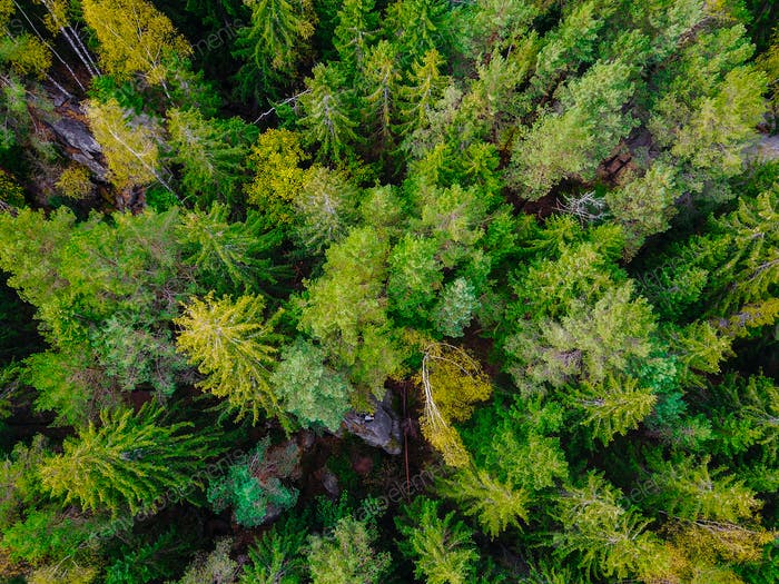 Top down aerial drone image of a forest.