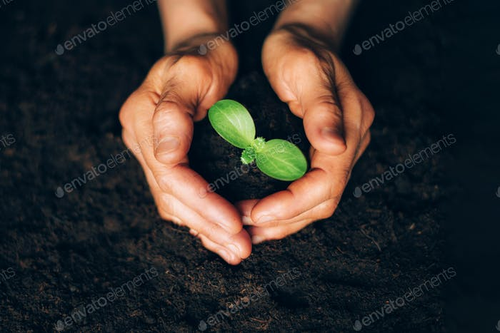 Woman hands holding green seedling, sprout over soil. Top view. Copy space. New life, eco