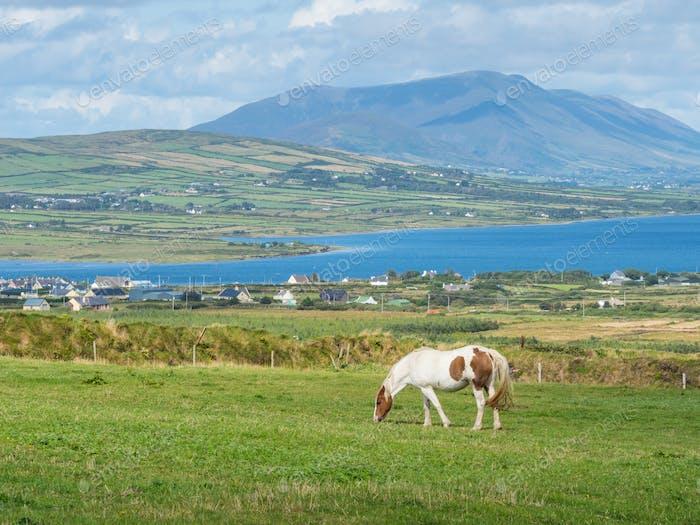 Grazing Horse in Ireland