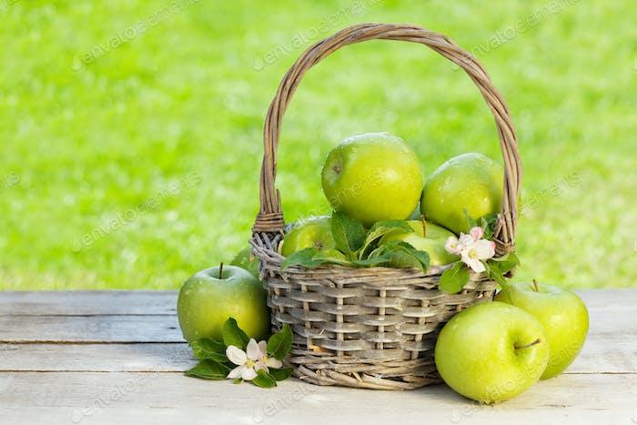 Fresh garden green apples in basket