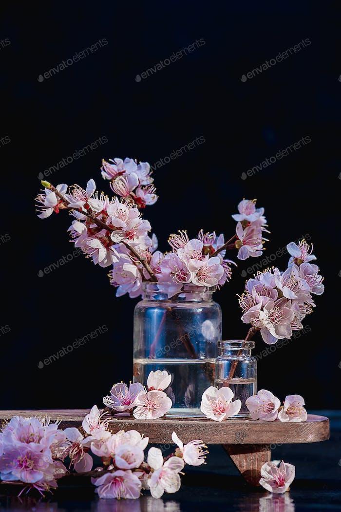 Kirschblüte, Sakura-Blumen in Glasgläsern auf einem Vintage-Buch. Zerbrechliche Frühlingsblüte Stillleben auf einem