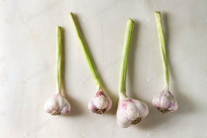 Bundle of young garden garlic