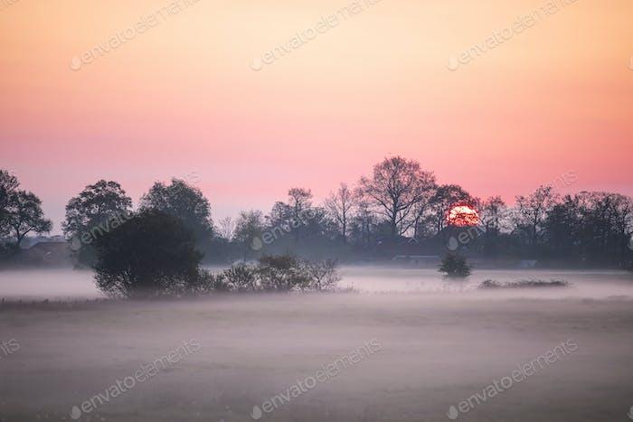 serene misty dawn on farmland