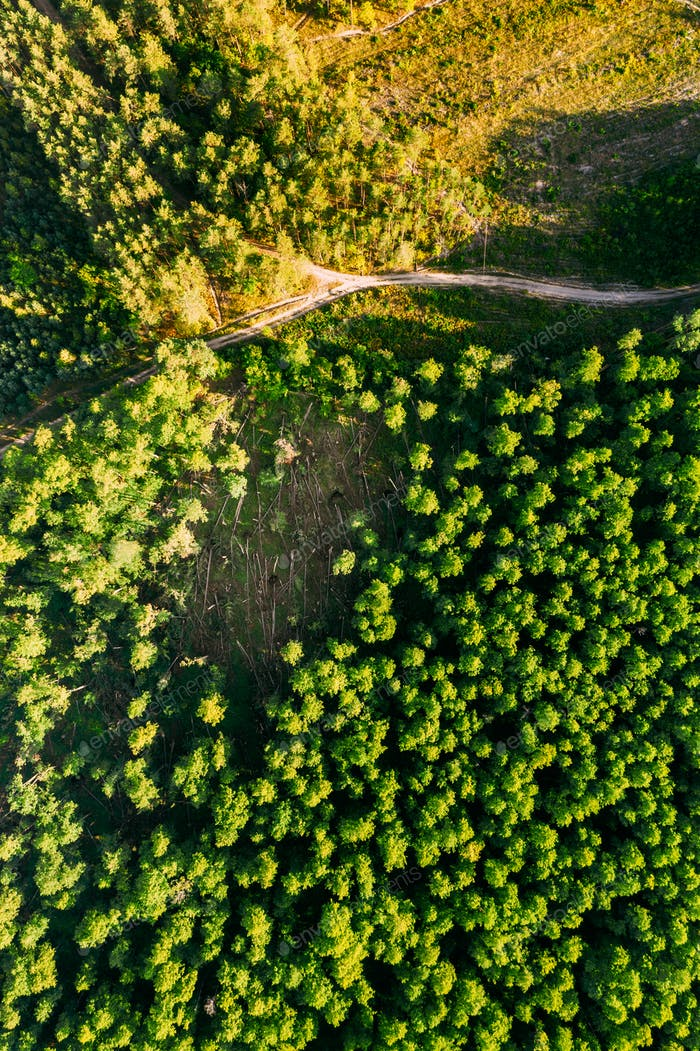 Aerial View Green Forest Deforestation Area Landscape. Top View Of Fallen Woods Trunks And Growing