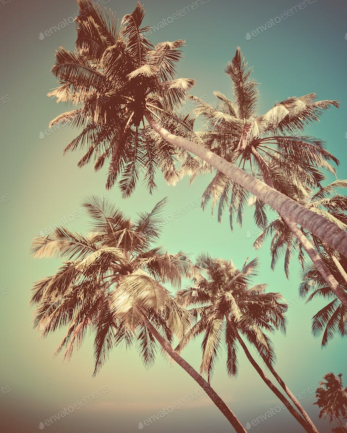 Palm tree and blue sky at sunny day relaxing view