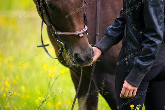Close-up of woman feeding her arabian horse with snacks in the field
